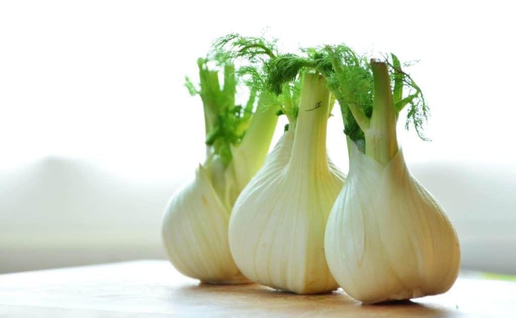 fresh fennel bulbs