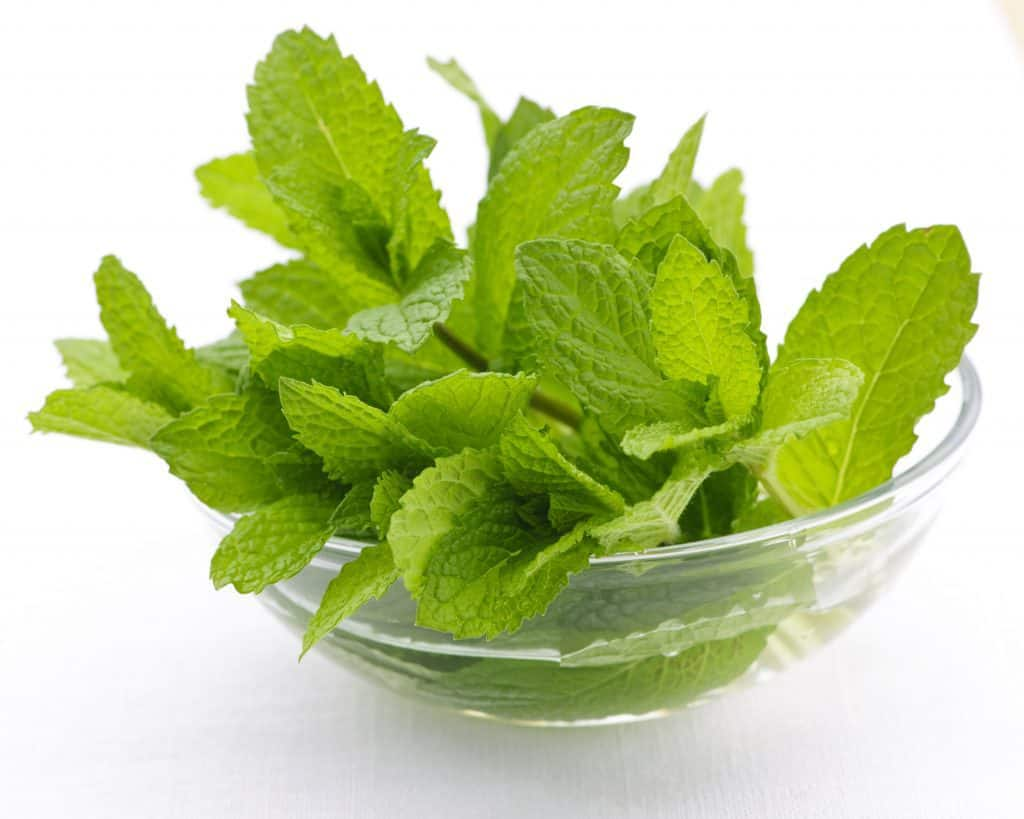 Bunch of fresh mint sprigs in clear glass bowl