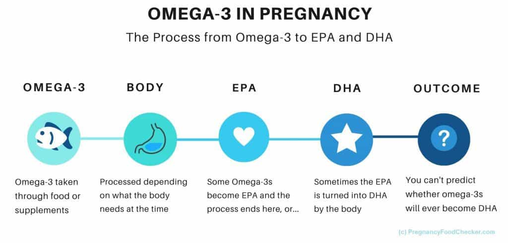 timeline of omega 3 to DHA and EPA