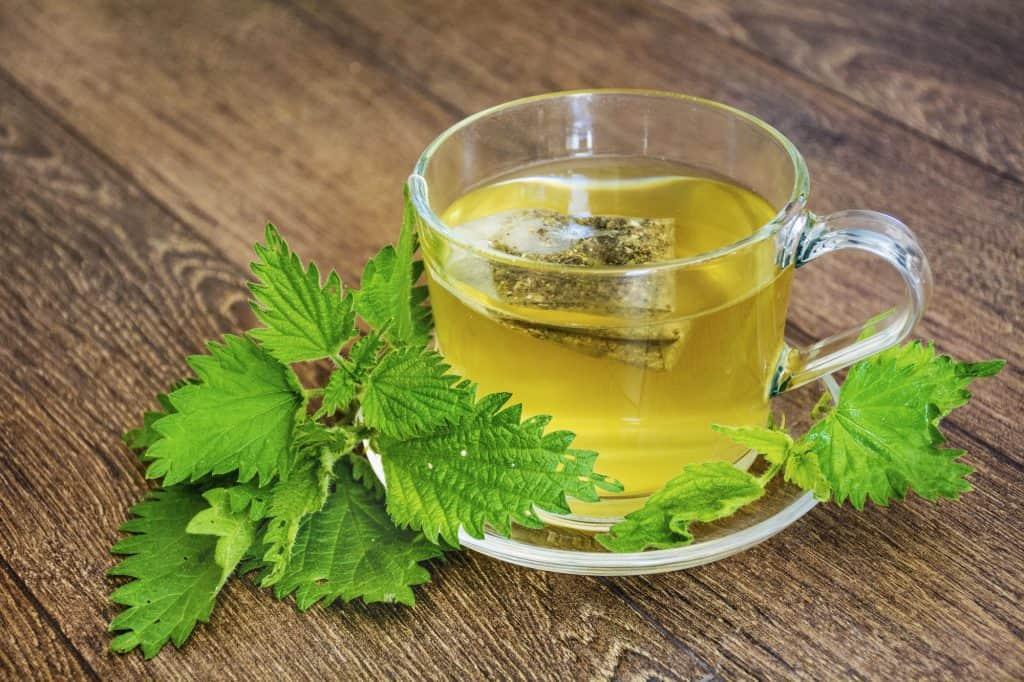 is nettle tea or stinging nettle safe during pregnancy