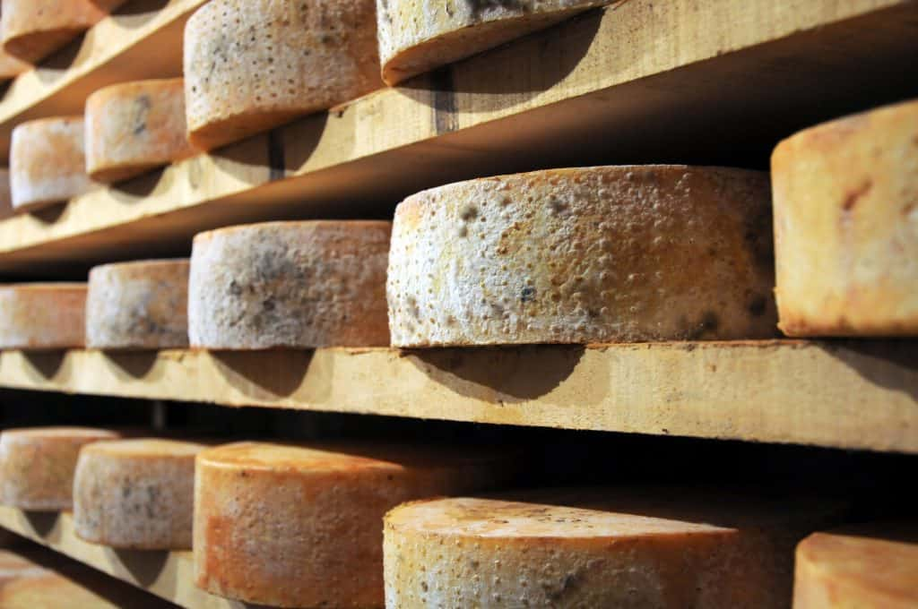 forms of fontina cheese in a shelf