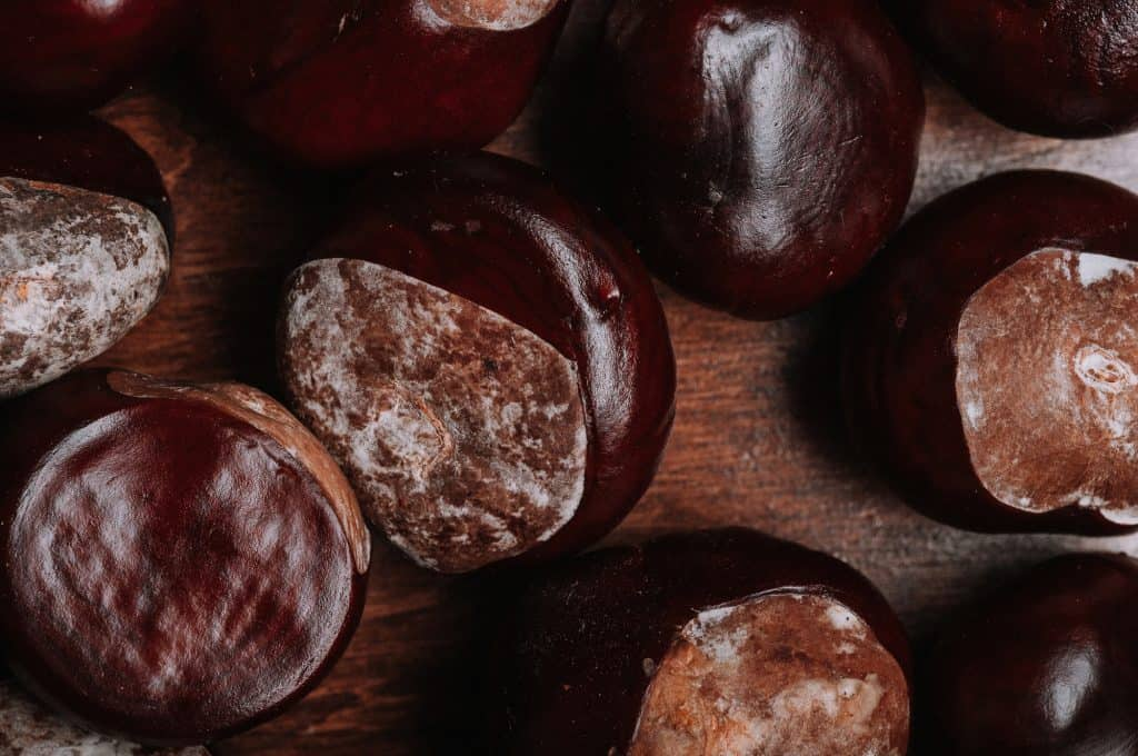horse chestnuts on table